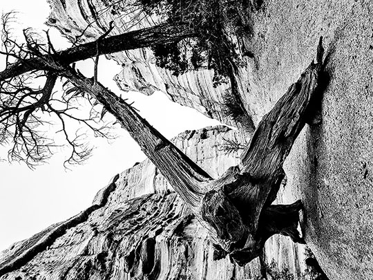 Dead Tree and Tent Rocks